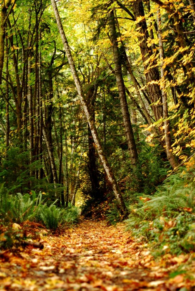 Fall Foliage on the Spruce Railroad Trail