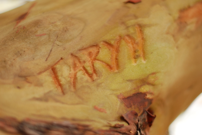 We found Taryn's named etched on a Madrona tree by the arched bridge.
